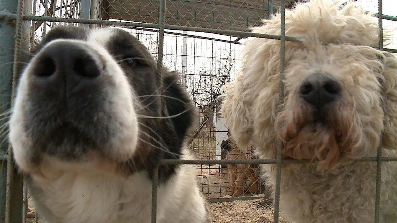 A Szolnoki Állatotthonban várják a kutyák az örökbefogadó gazdájukat