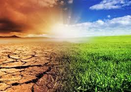 A növények és az állattok is szenvednek a klímaváltozástól
