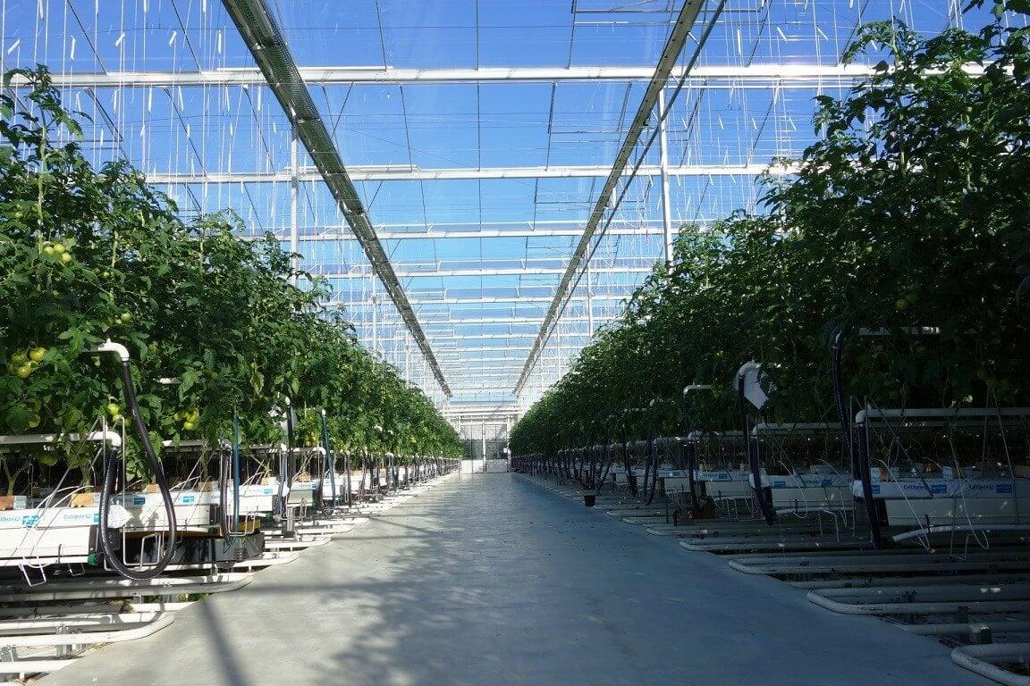 Csaknem 8 ezer négyzetméteres üvegház épül Hódmezővásárhelyen
