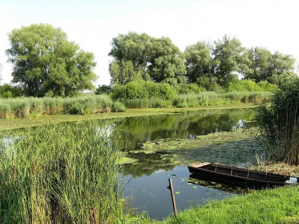Helyreállítják a vizes élőhelyeket Bács megye déli részén