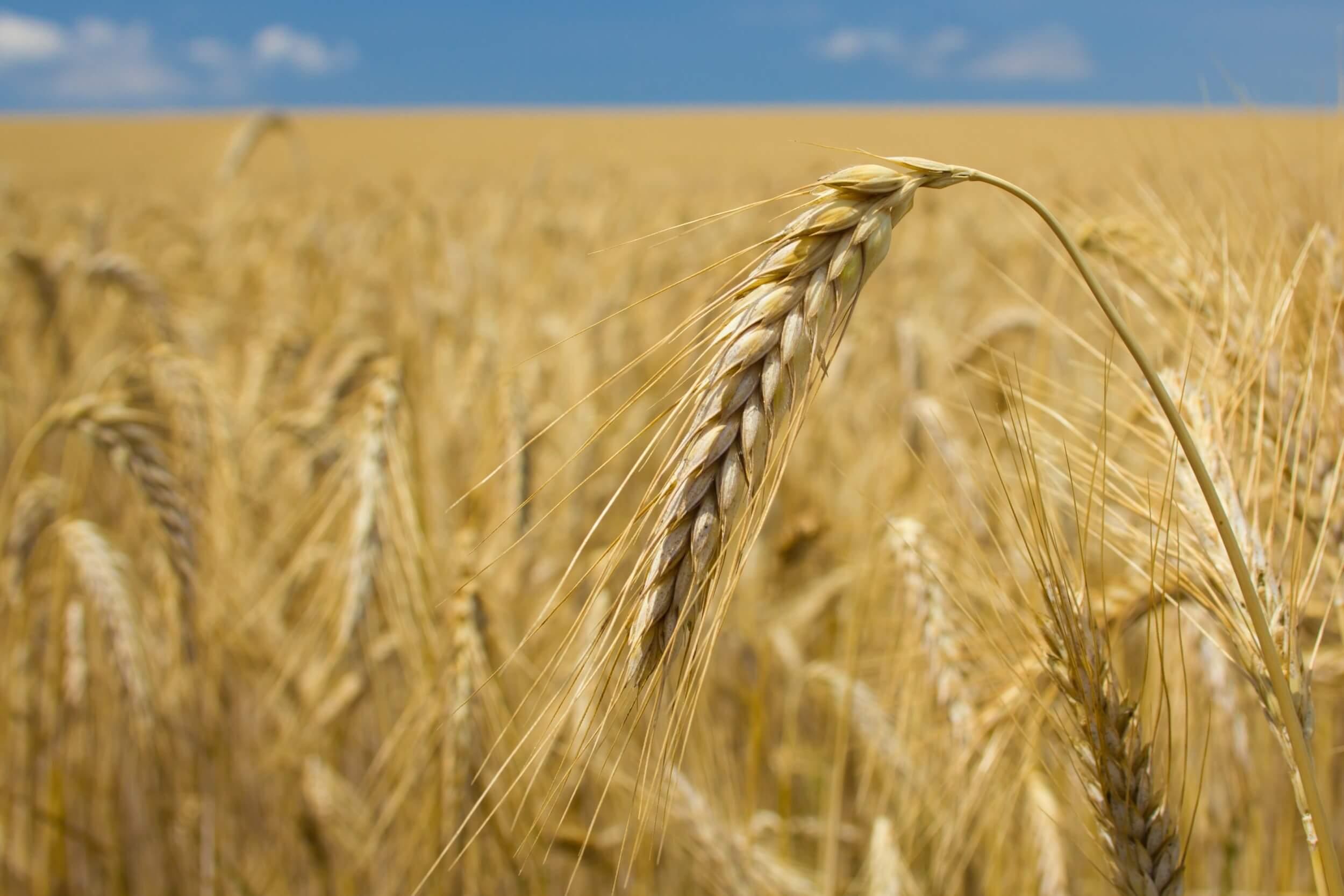 Elkezdődött a 30 milliárdos visontai élelmiszeripari beruházás