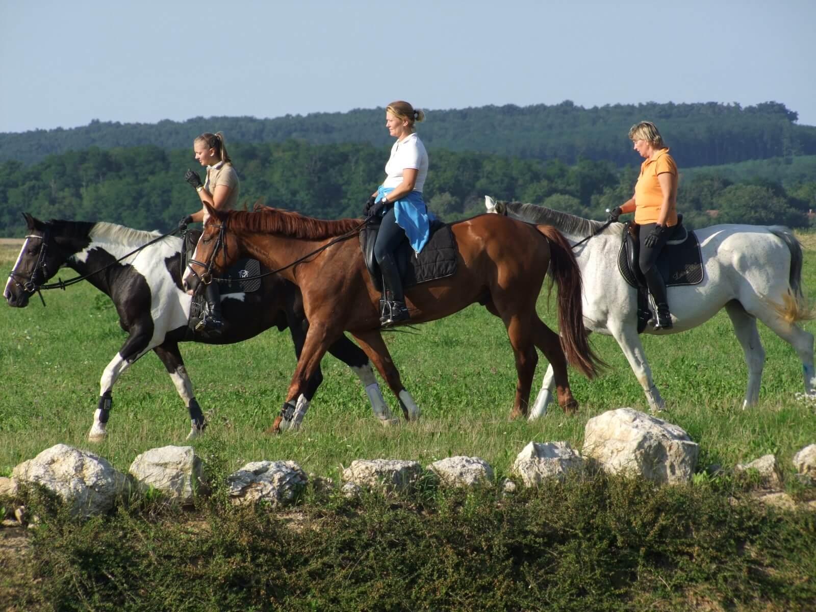 Hat megyében épül ki a lovas turizmushoz szükséges infrastruktúra