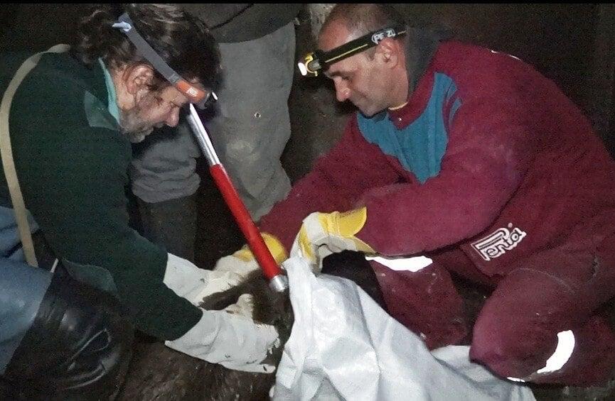 Eltévedt hódokat mentett kivitelezés közben a Penta