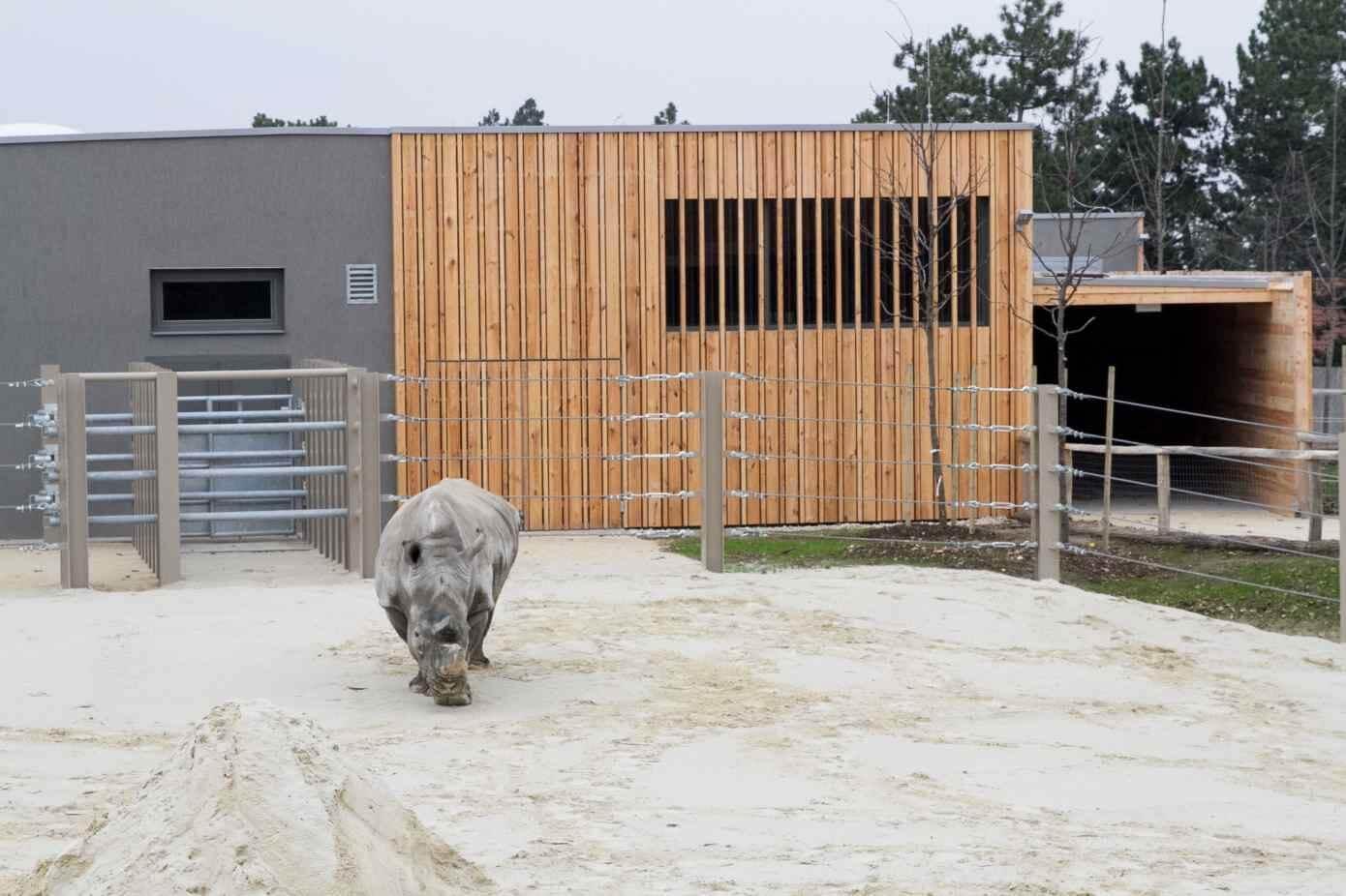Orrszarvú- és zsiráfházzal is gazdagodik a győri állatkert