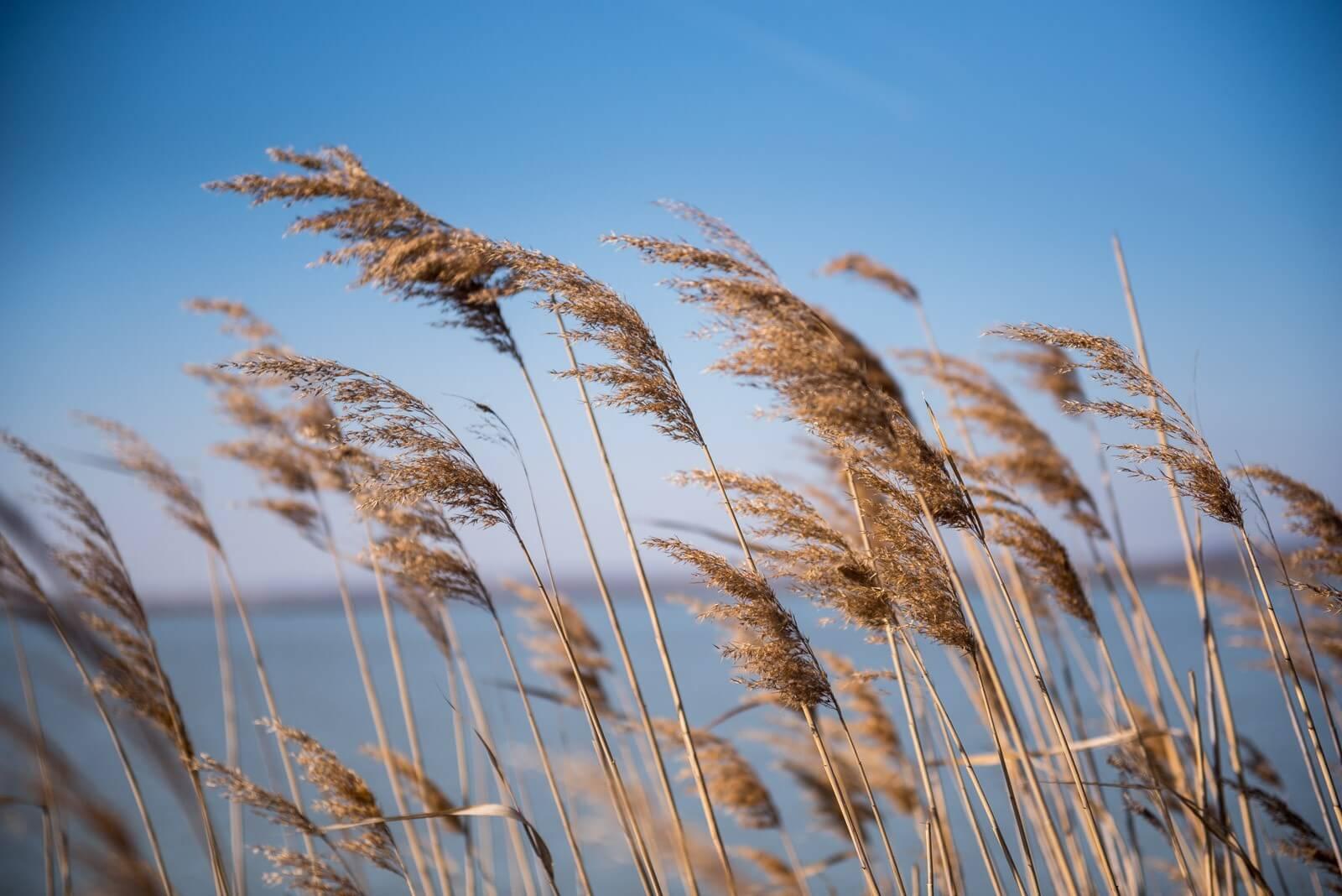 Az élővilágnak is kedvez a Velencei-tó rehabilitációja