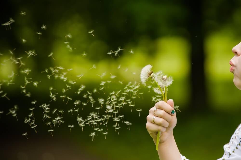 Rossz hír az allergiásoknak: kéz a kézben jár klímaváltozás és a pollentermelődés növekedése