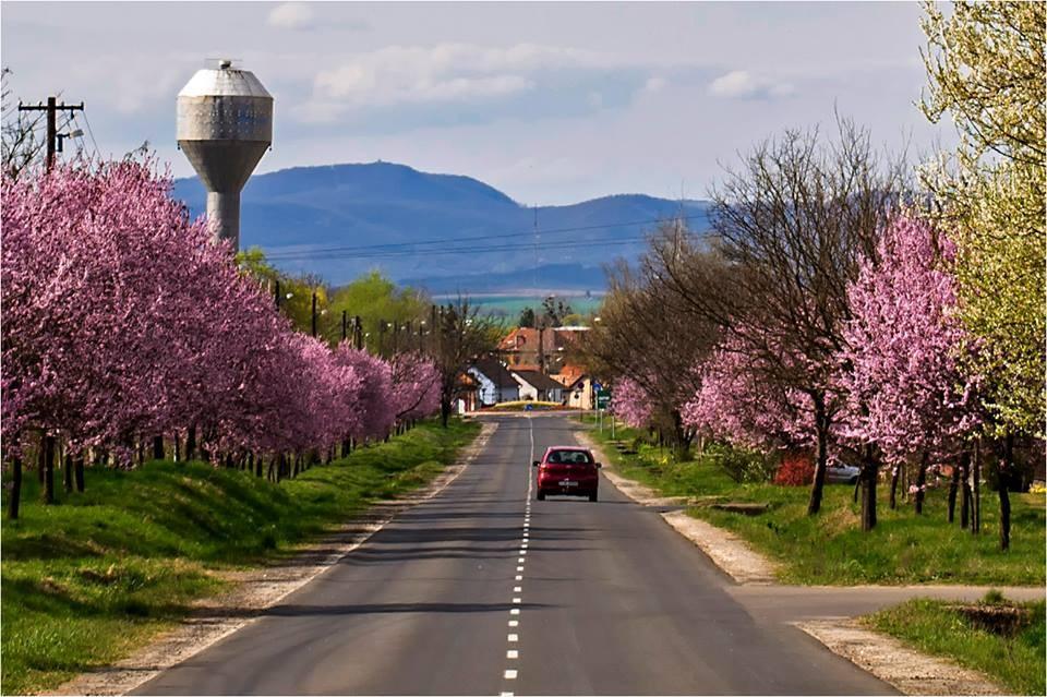 Tavaszi képgaléria Balassagyarmatról