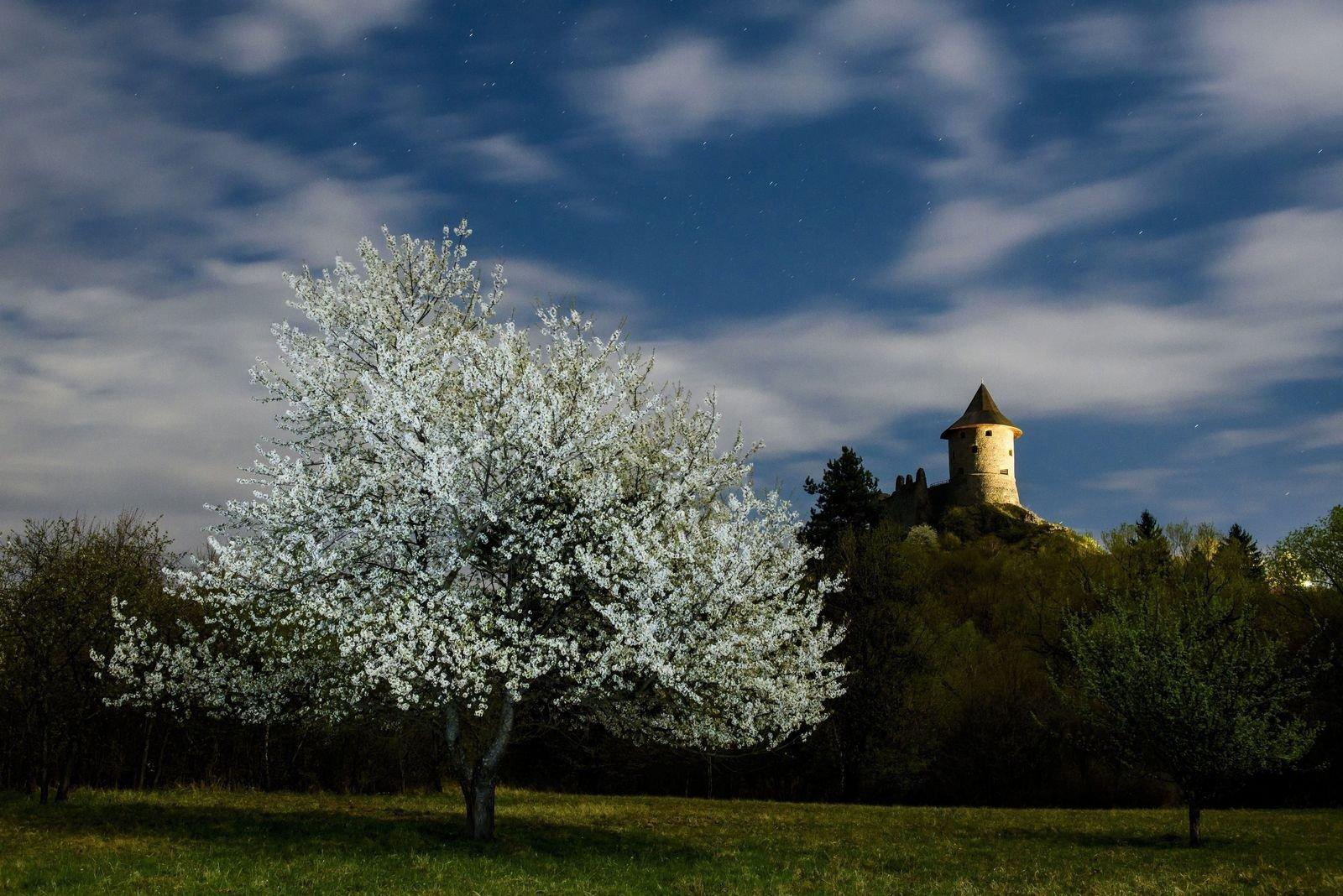 Virágzik a cseresznyefa Somoskőn