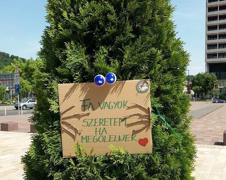 Kedves díszeket kaptak Salgótarján belvárosi fái