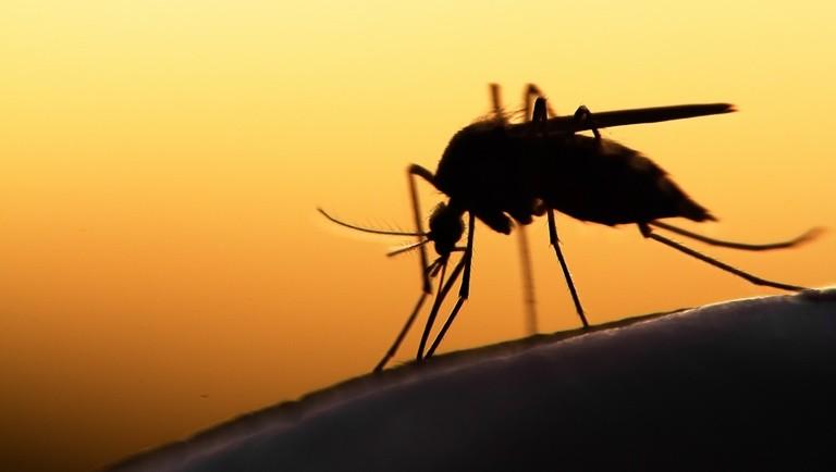 Ma ismét ellentámadás indul a szécsényi szúnyogok ellen