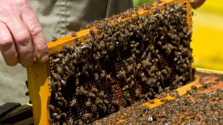Újra Igényelhető Méhészeti Támogatás