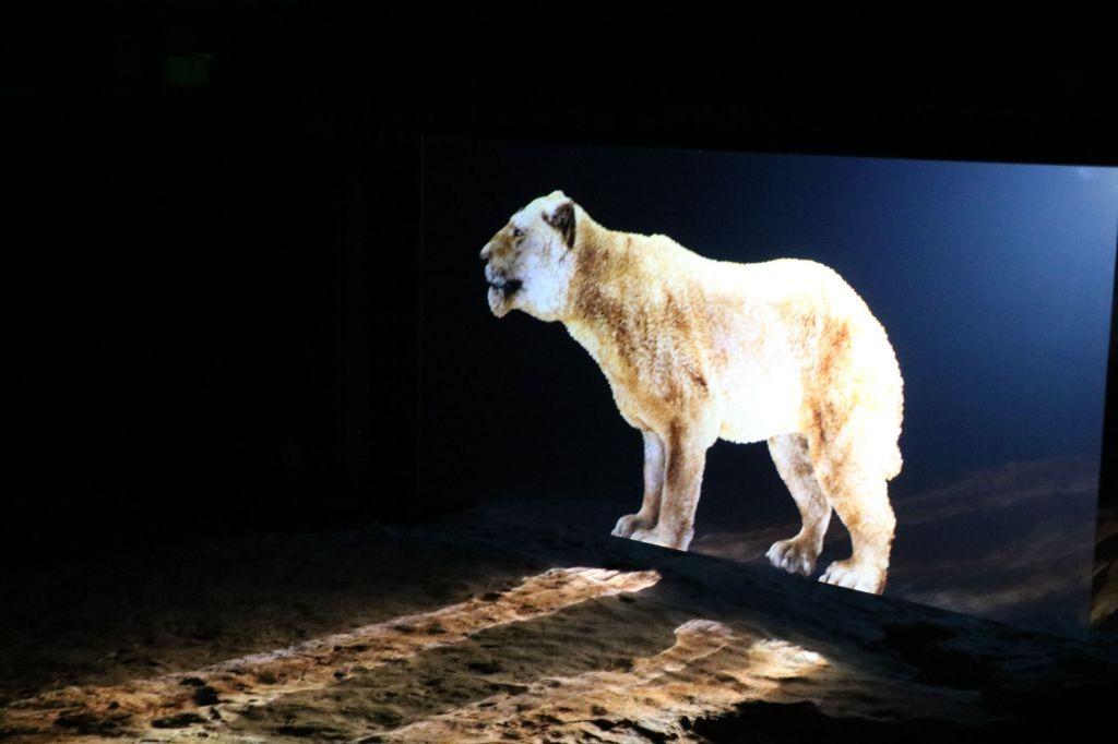 Ipolytarnócon hologramos bemutatón elevenedik meg az ősvilág