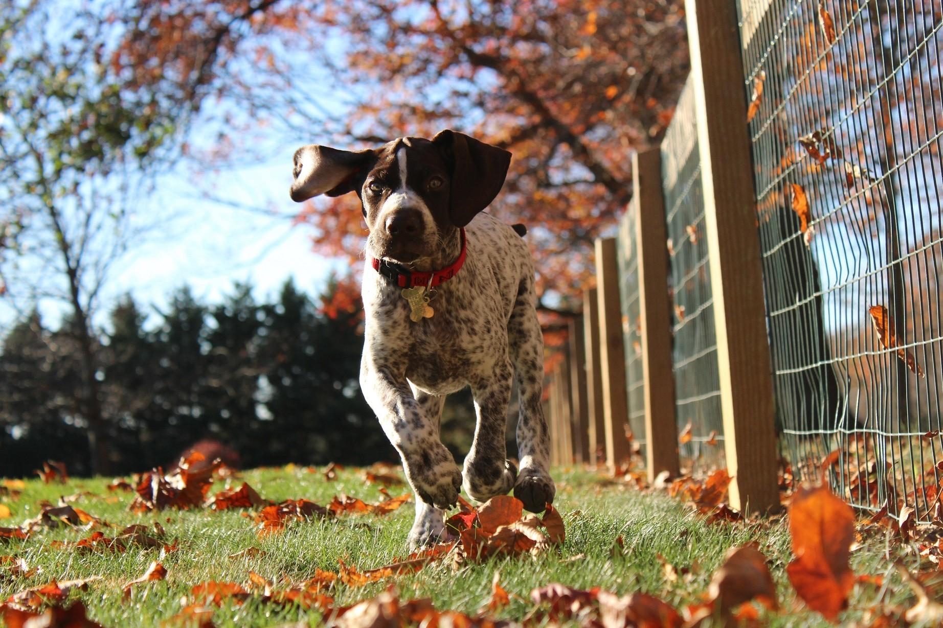 Az ősz veszélyei a kutyák számára
