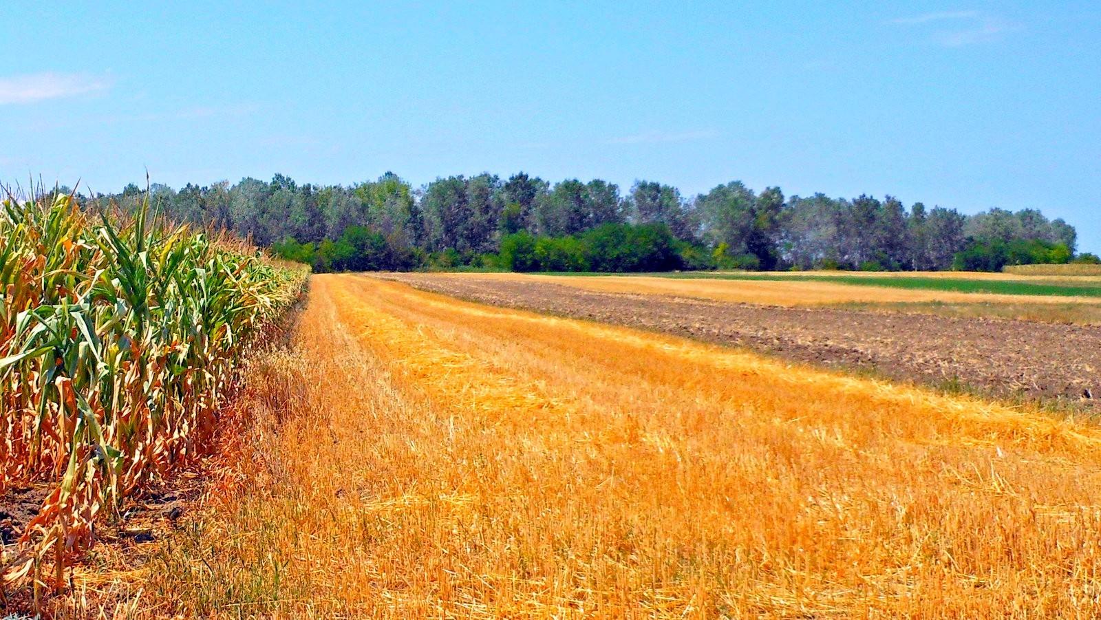 A szántóföldek hektáronkénti átlagára Nógrád megyében volta a legalacsonyabb
