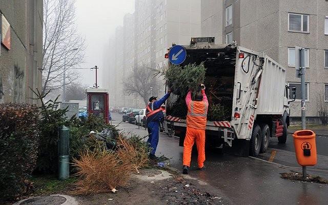 Csütörtökön indul Balassagyarmaton a leszedett karácsonyfák elszállítása
