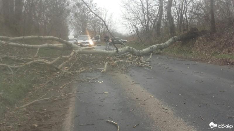Gondokat okozott a viharos szél Nógrád megyében