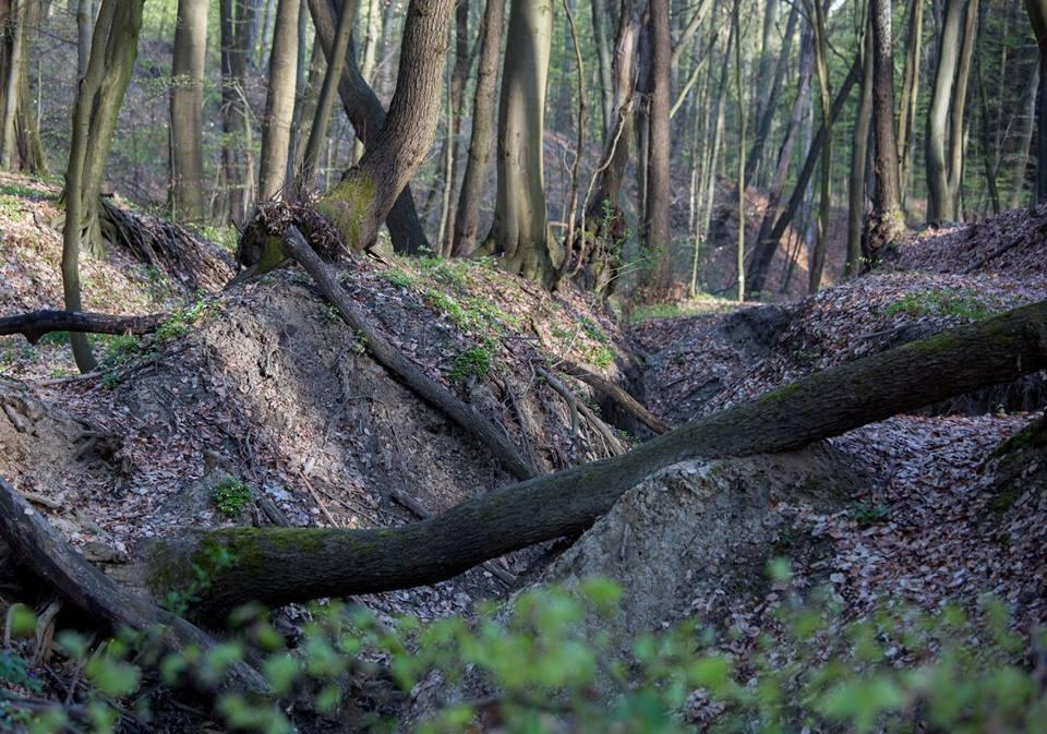 Ma véget ér az erdőtakarítási hét a Geoparkban