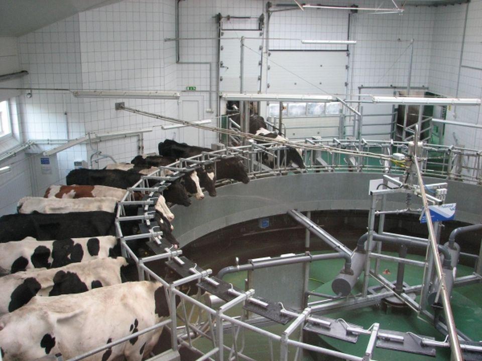 Mintegy 600 millió forintból fejlesztett a dabasi Lakto Kft.