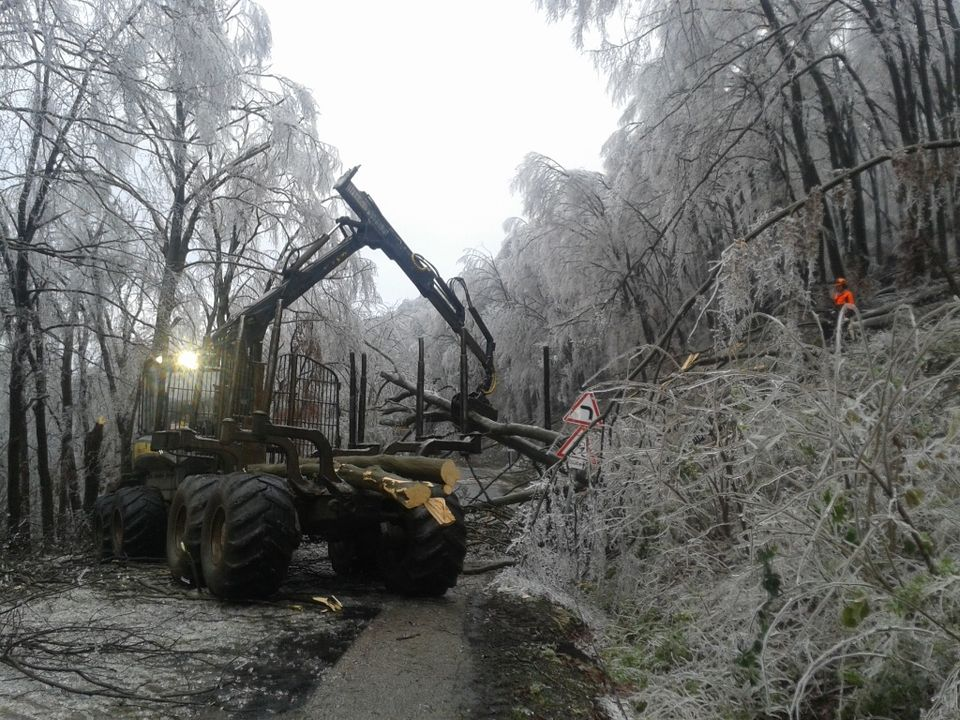 Megkezdődtek a faültetések a jégkár sújtotta erdőterületeken