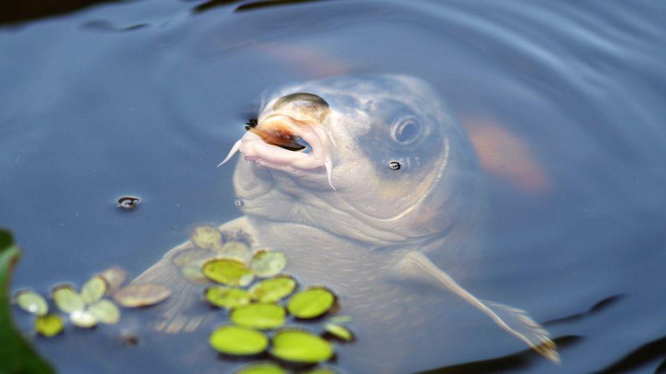 Jelentős pályázatok lesznek a halgazdálkodási szektorban