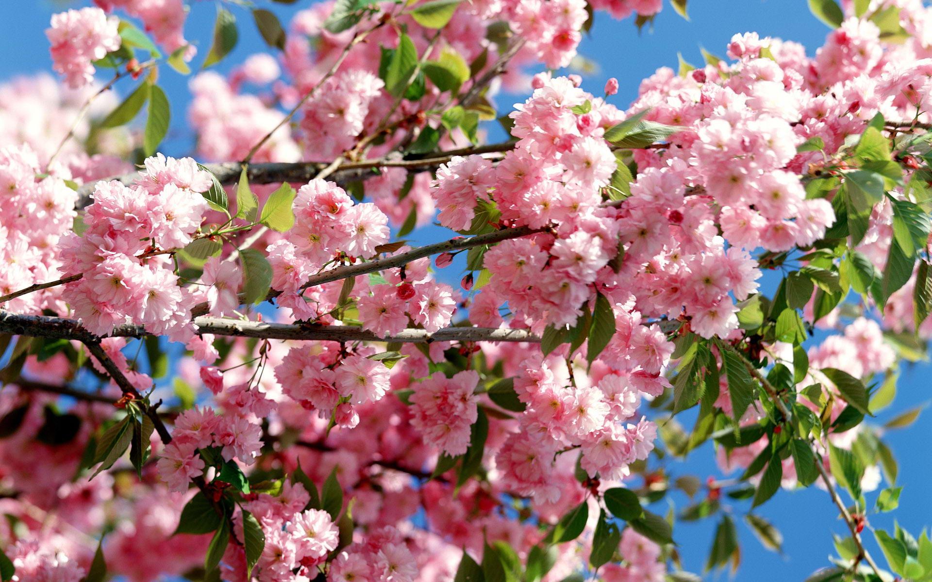 Hamarosan Váci Tavaszi Fesztivál