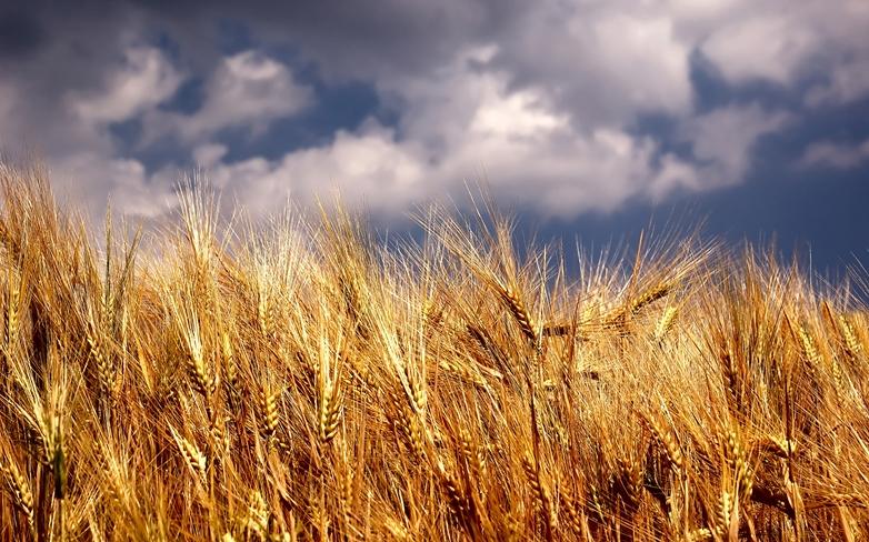 Stabilizálni kell a magyarországi szántóföldi hozamokat