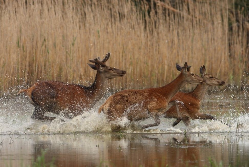 Országos természetvédelmi rendezvénnyé nőtte ki a magát a gödöllői filmfesztivál