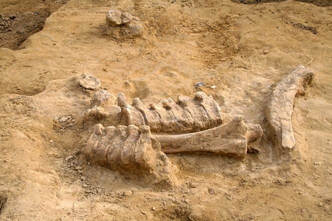 Jégkorszaki bűntényt deríthetünk fel a Természettudományi Múzeum új tárlatán