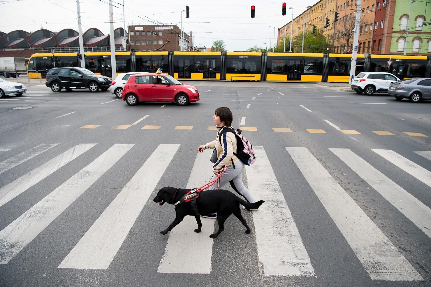 A hangjelzéses kereszteződések hiányára figyelmeztet egy vakvezető kutyaiskola