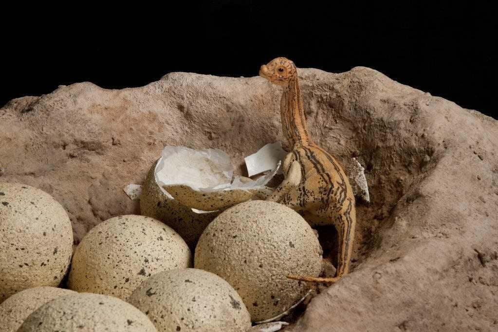 Mozgó, életnagyságú dinoszauruszokkal nyílik a Budakeszi Dinó Park