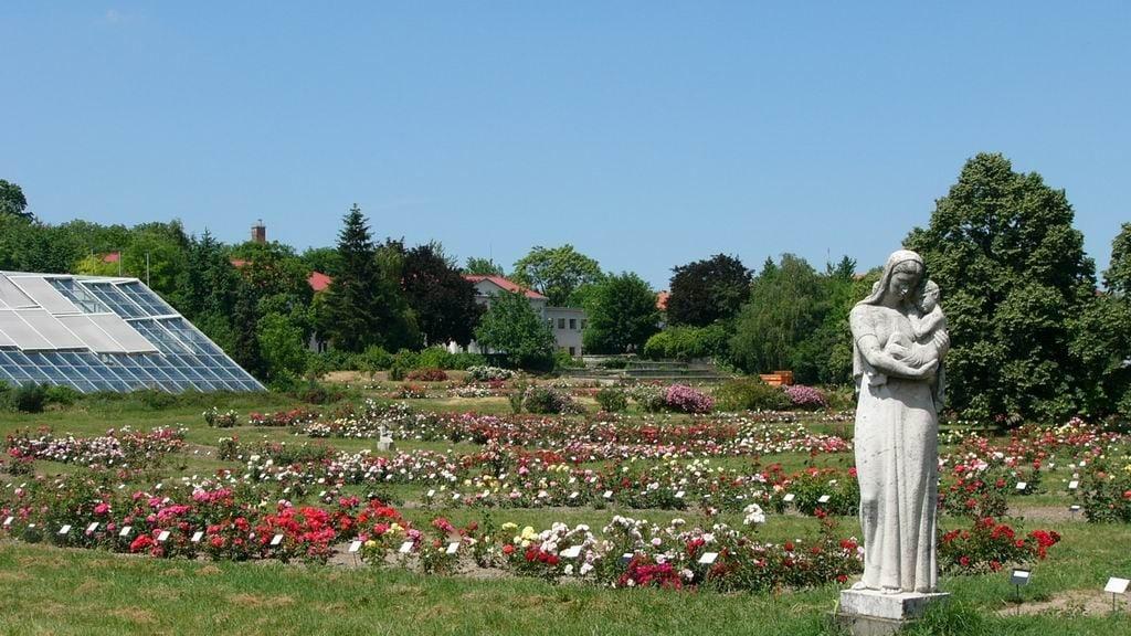 Megújult az ezer rózsafajt bemutató budatétényi rozárium