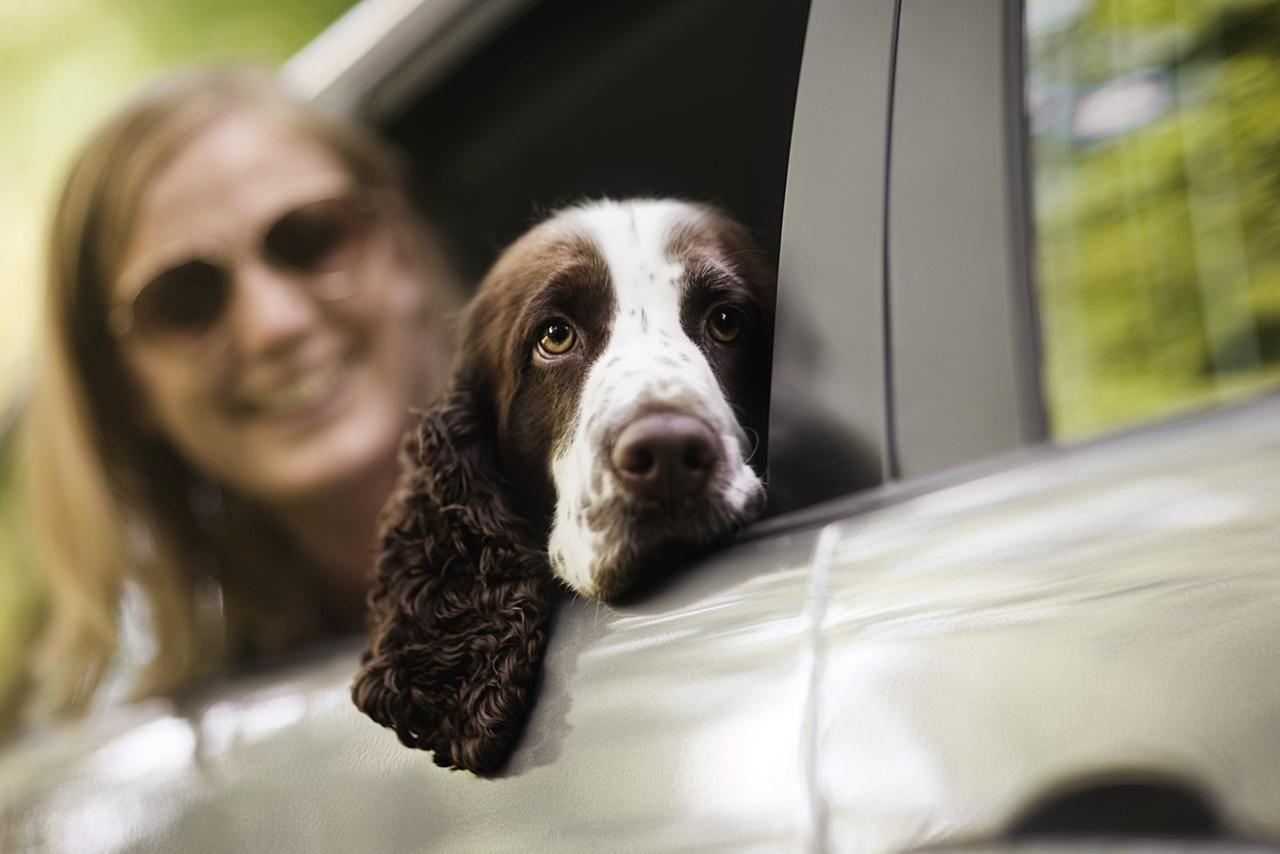 Kutyabaráttá váltak a MOL töltőállomásai