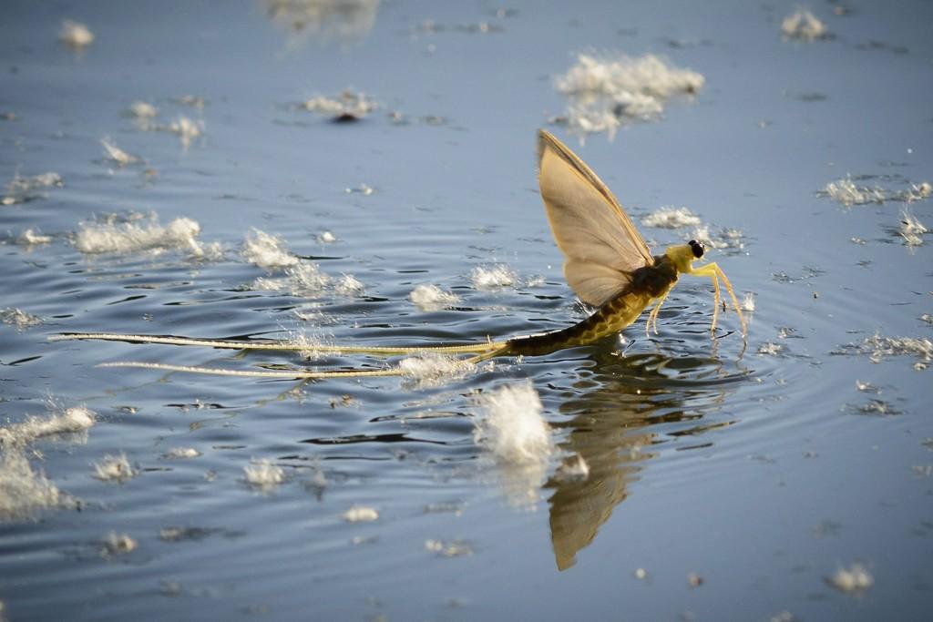 Ennyivel tisztább a Duna: újra megindult a dunavirágzás