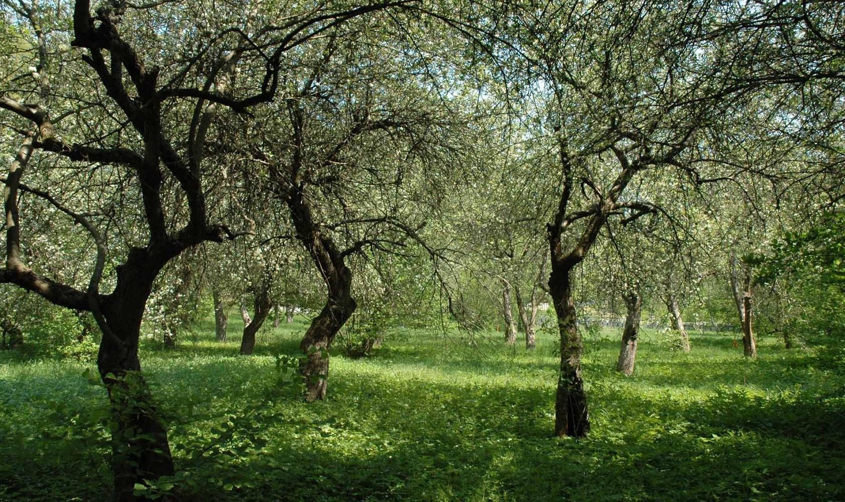 Így élesztik újjá a zártkertek gyümölcsöseit és szőlőit
