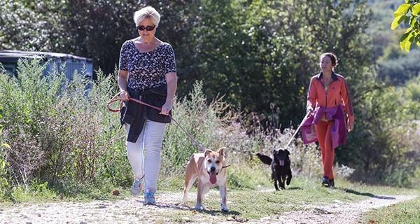 Gyógyszert és törődést kaptak a Budaörsi Állatmenhely kutyái és macskái