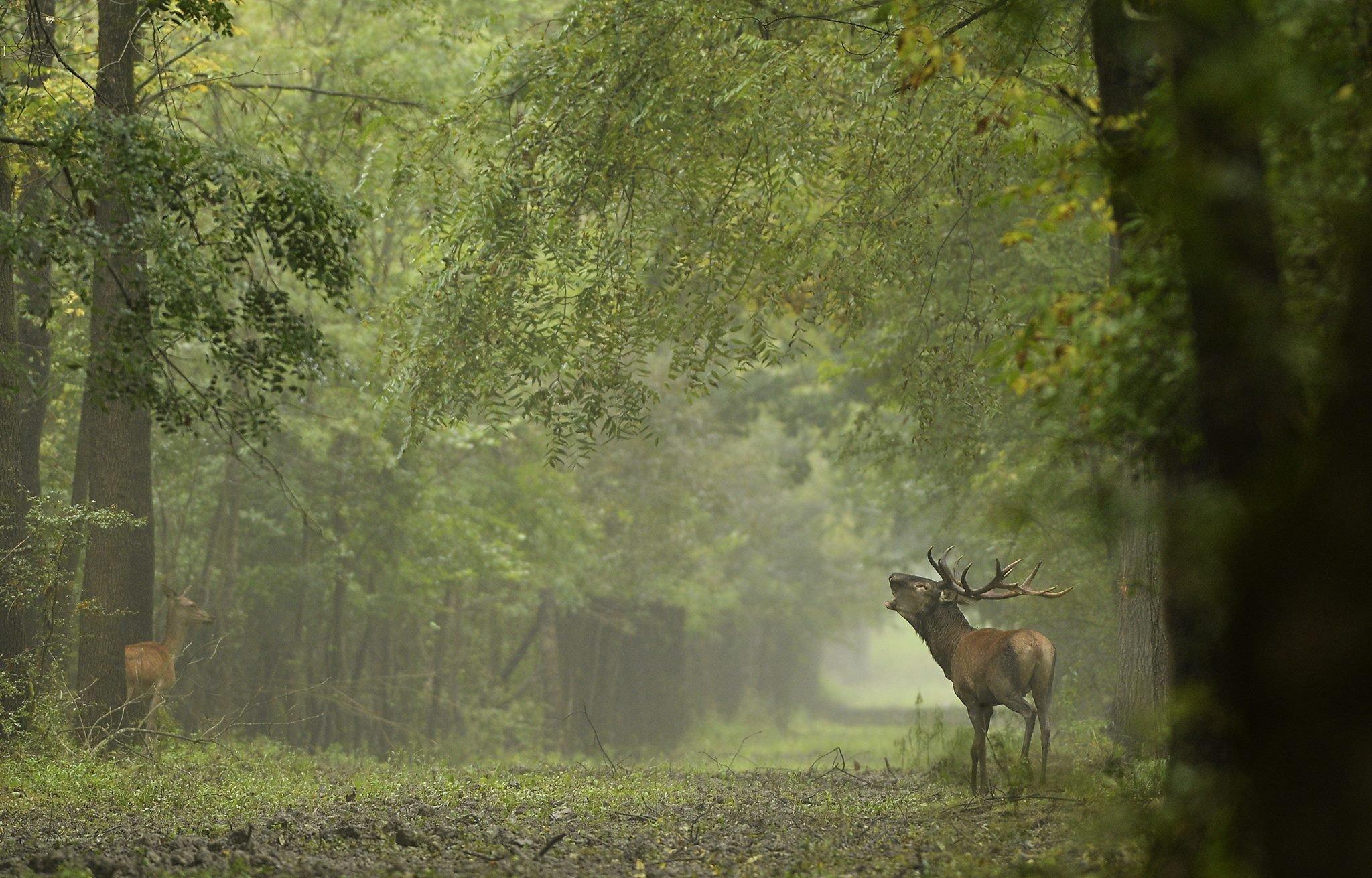 Szuper őszi program: szervezett túrán hallgathatjuk a szarvasbőgést a Pilisben