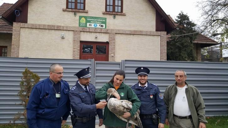 Hattyút mentettek a Rákos-patakból a rendőrök