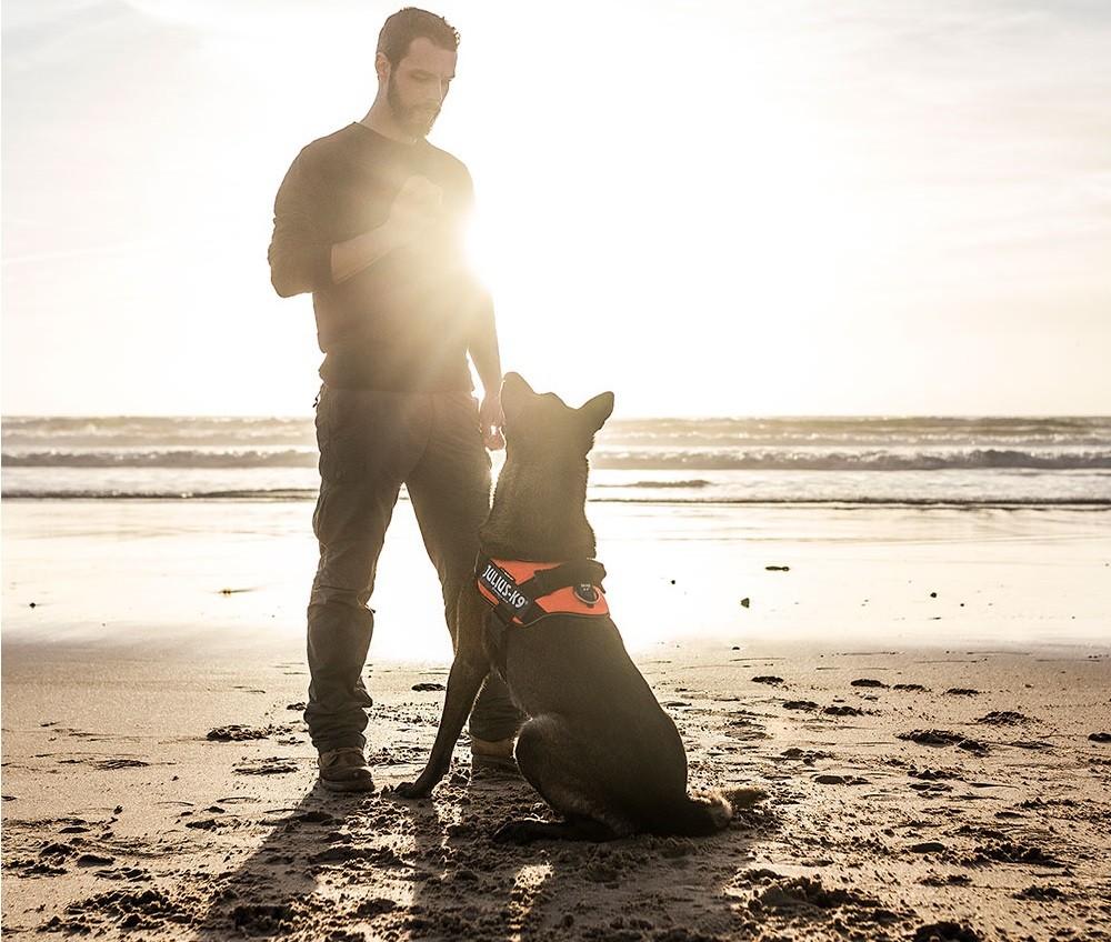Las Vegastól Kínáig hódít egy magyar fejlesztésű kutyahám