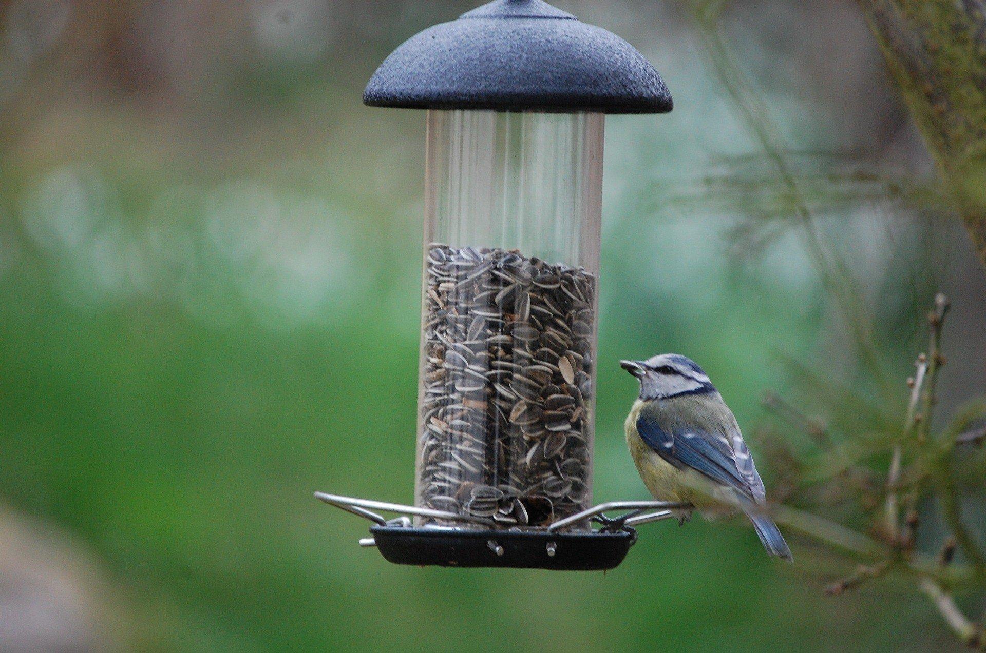 Kezdődik a madáretetés: ezeket a szabályokat tartsuk be