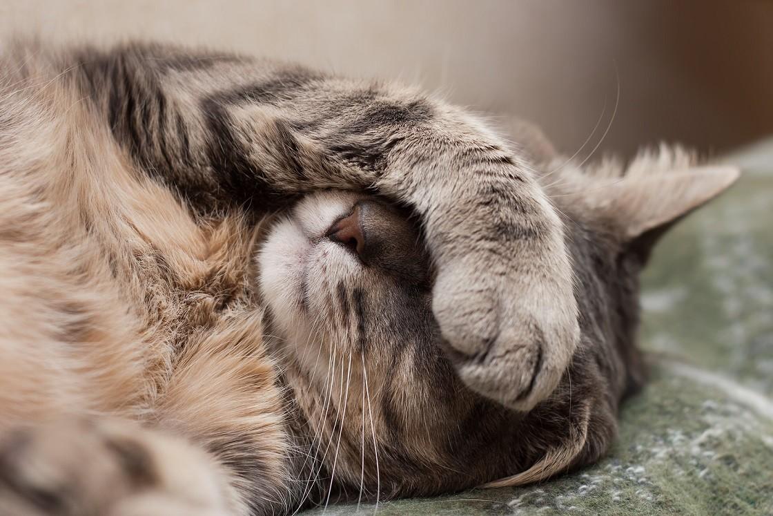 Nem mindegy, melyik mancsát használja többet a macskánk