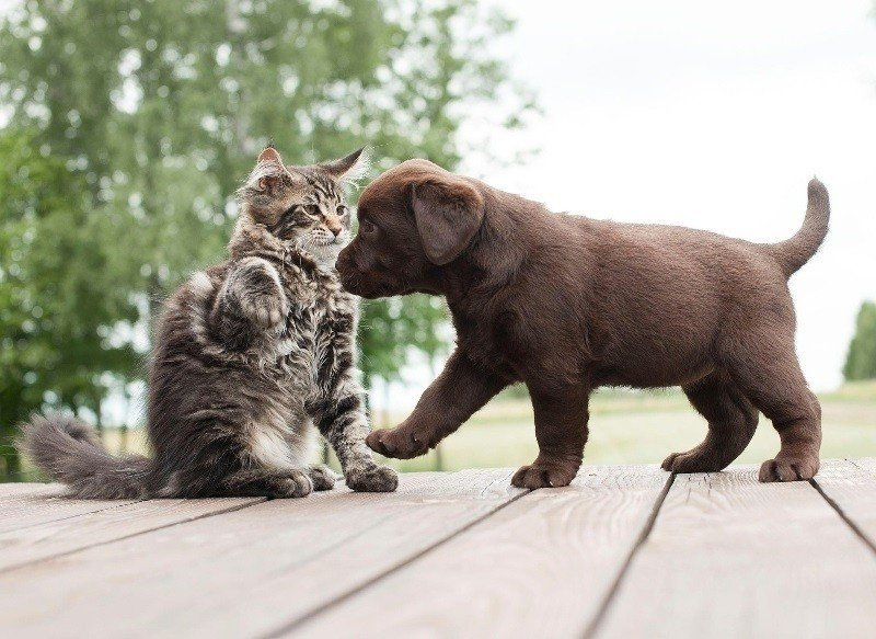 Győztek a macskák: egész Európában népszerűbbek a kutyáknál