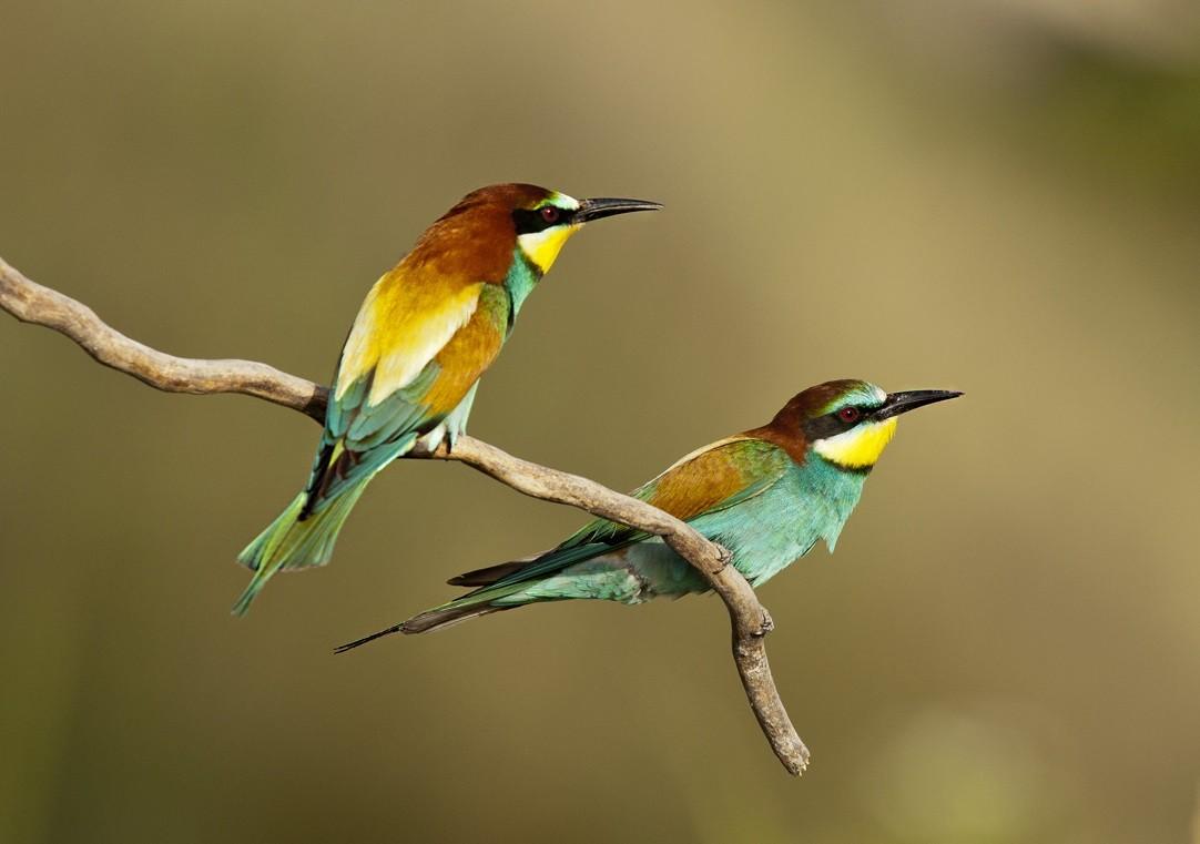 54 országban figyelik a gyerekek idén is a költöző madarak útját