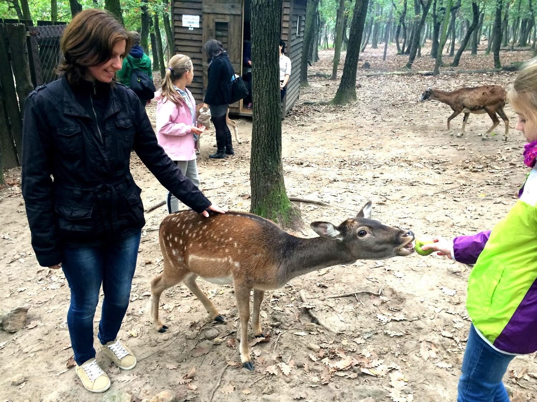 Önkéntes nappal ünnepli a budakeszi vadaspark a beköszöntő tavaszt