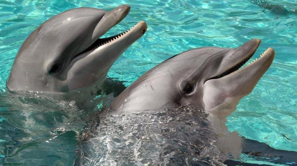 Ezzel a képességgel még az ember intelligenciáját is verik a delfinek