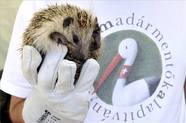 A vadállatmentő munkát mutatják be az állatkertben