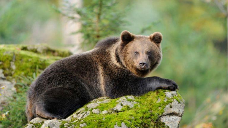 Bács-Kiskun megyéig is eljutott az abonyi medve