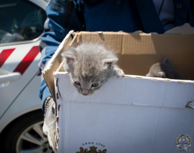 Motorosrendőrök mentettek kiscicákat az M5-ösön