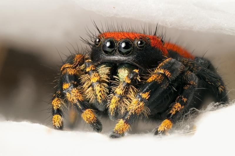 Pókokról tárgyalnak Vácott