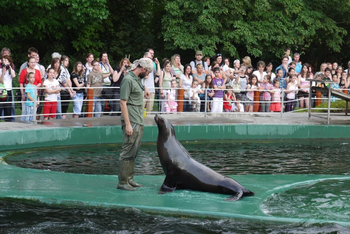 Rekordot döntött a fővárosi állatkert