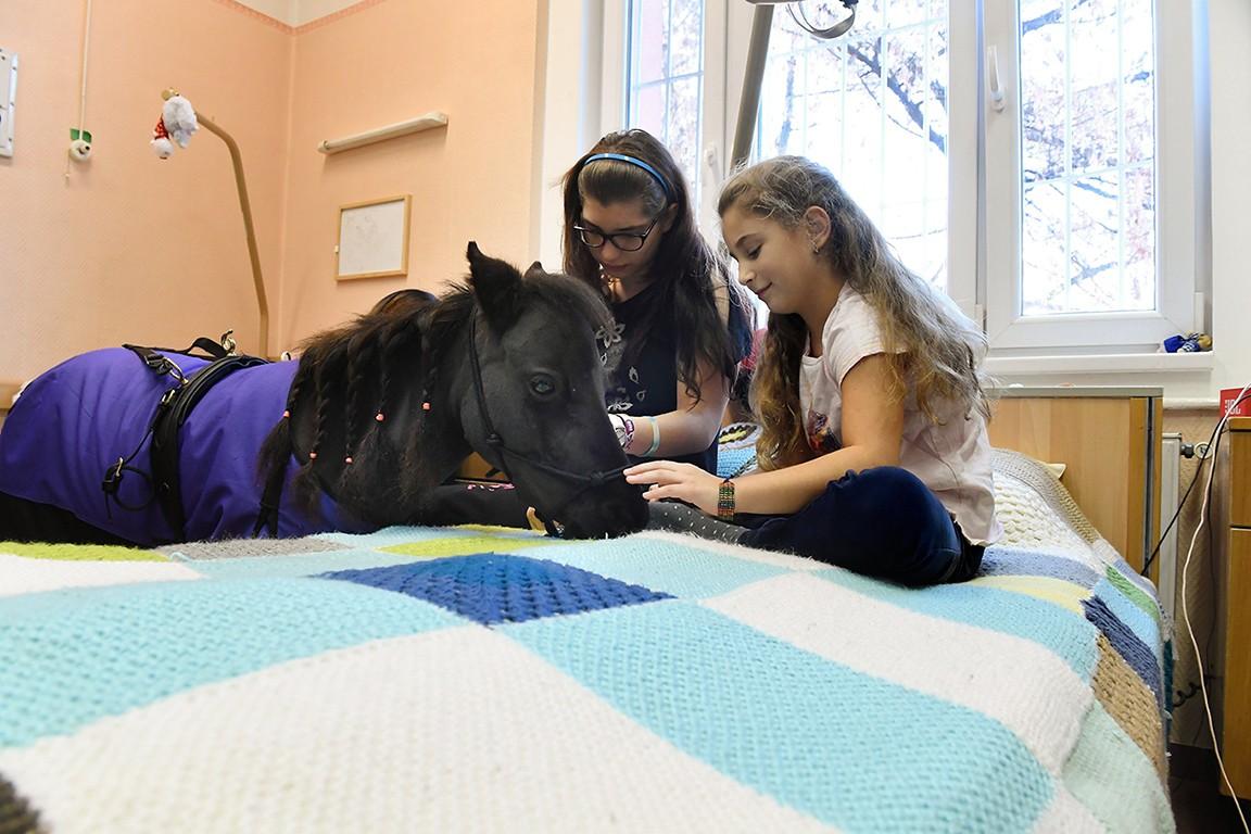 Ilyen még nem volt Magyarországon - lovak gyógyítják a zuglói gyerekkórház betegeit